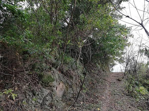 2019.12.19.牛埔尾山 (114).jpg