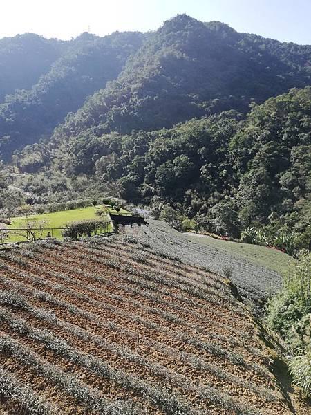圳沽古道.磨石坑山 (72).jpg