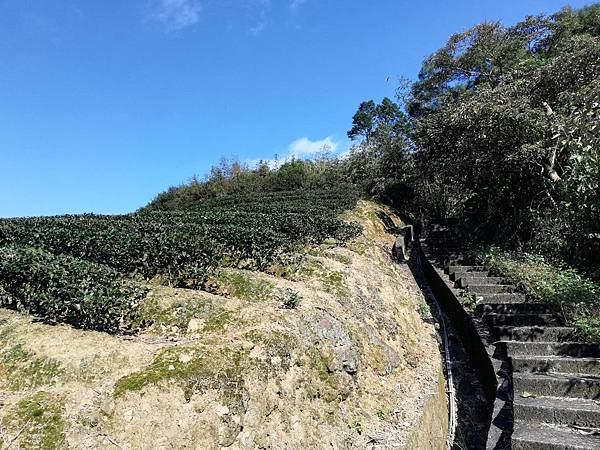圳沽古道.磨石坑山 (54).jpg