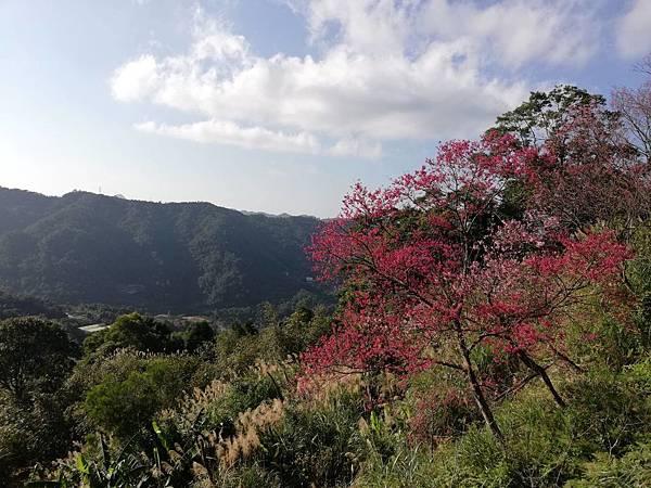 圳沽古道.磨石坑山 (80).jpg