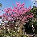 圳沽古道.磨石坑山 (69).jpg