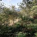 圳沽古道.磨石坑山 (19).jpg