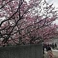 2020.01.15平菁街42巷櫻花 (29).jpg