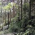 2019.05.31大桶山 (7).jpg
