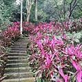 2020.01.19紫竹林步道 (8).jpg