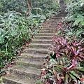 2020.01.19紫竹林步道 (31).jpg