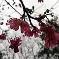 2020.01.19紫竹林步道 (6).jpg