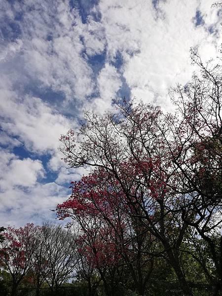 2020.01.22北投社三層崎公園.中正山 (86).jpg