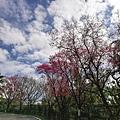 2020.01.22北投社三層崎公園.中正山 (91).jpg