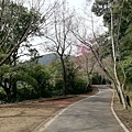 2020.01.22北投社三層崎公園.中正山 (47).jpg