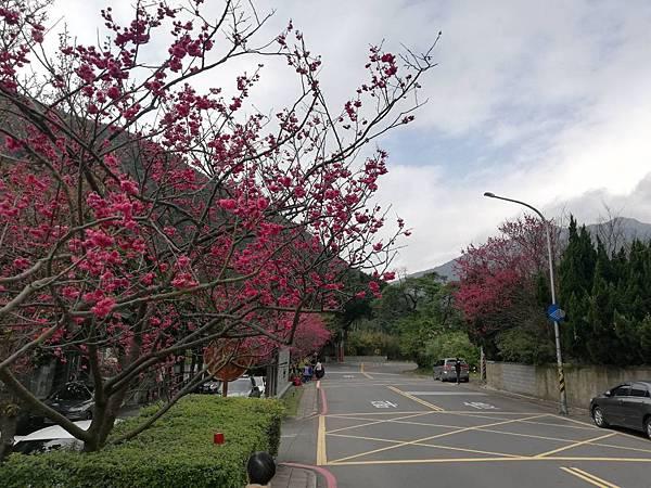竹子湖青楓步道 (9).jpg
