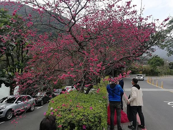 竹子湖青楓步道 (33).jpg
