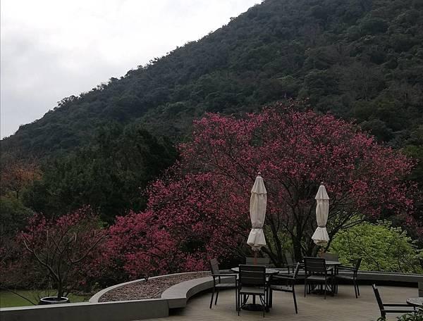 竹子湖青楓步道 (45).jpg