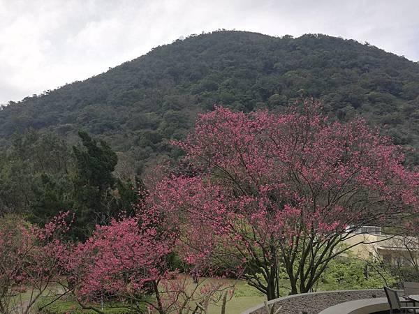 竹子湖青楓步道 (36).jpg