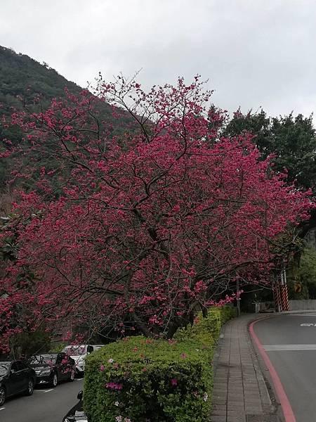 竹子湖青楓步道 (2).jpg