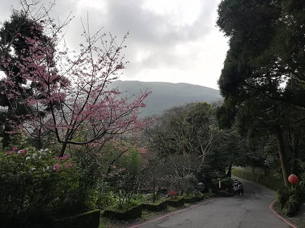 竹子湖青楓步道 (49).jpg