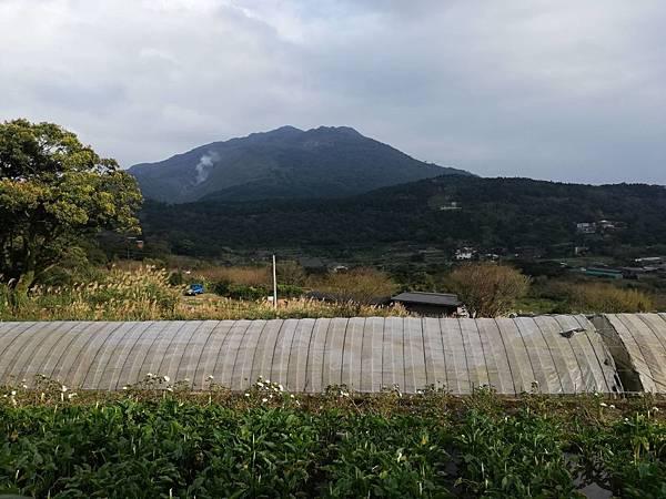 竹子湖青楓步道 (43).jpg