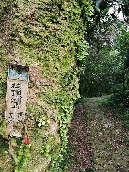 竹子湖青楓步道 (40).jpg