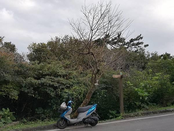 竹子湖青楓步道 (11).jpg