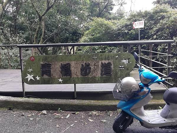竹子湖青楓步道 (8).jpg