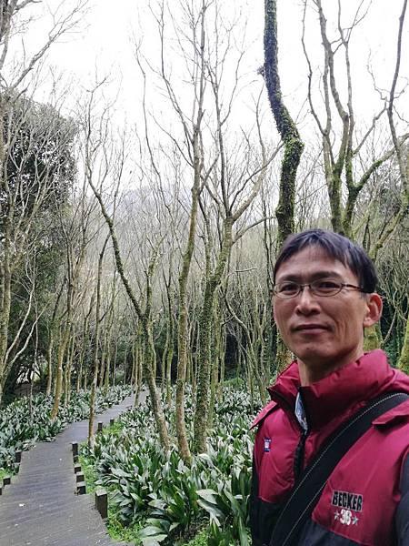 竹子湖青楓步道 (44).jpg
