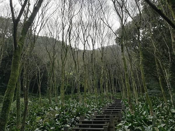 竹子湖青楓步道 (42).jpg