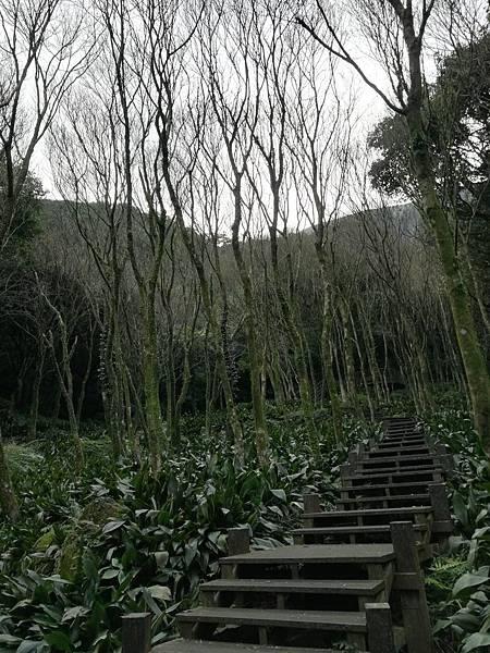 竹子湖青楓步道 (3).jpg