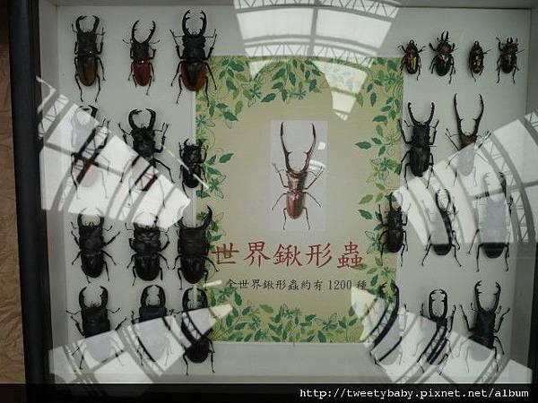 最後一天.青年公園昆蟲展 085.JPG