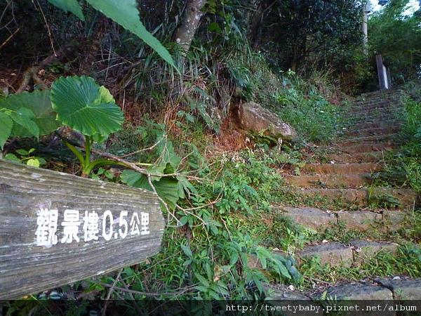 中正山夜景 017.JPG