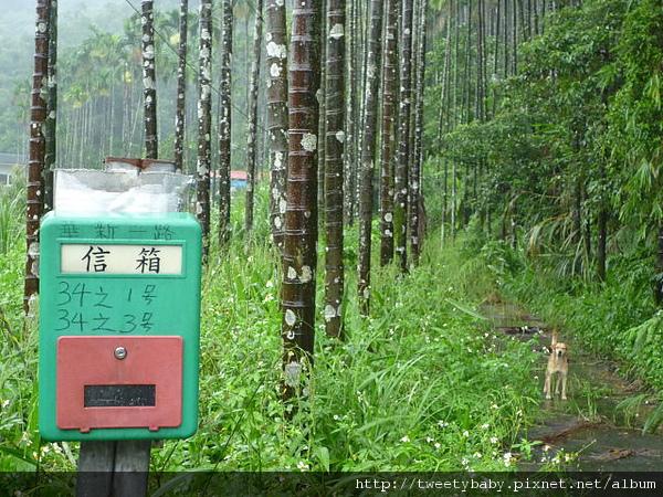 颱風雨五堵健行未竟之旅 070.JPG