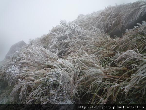 七星山下雪了 075.JPG