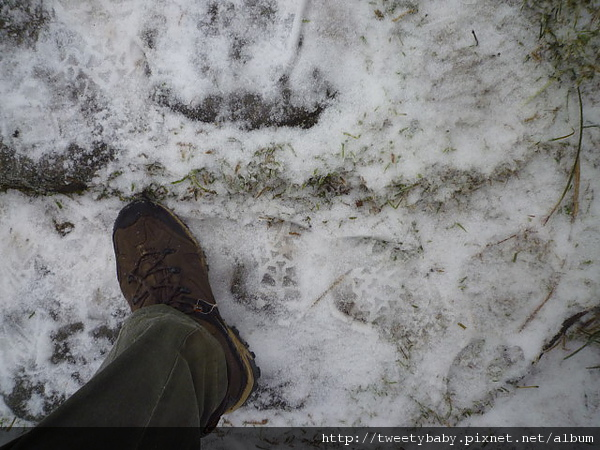 七星山下雪了 042.JPG