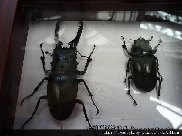 最後一天.青年公園昆蟲展 038.JPG