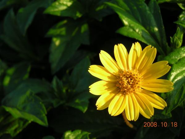 971018河濱公園-花