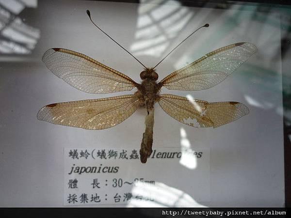 最後一天.青年公園昆蟲展 059.JPG
