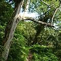 福巴越嶺.檜山 167.JPG