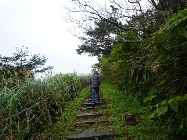 竹子湖上中正山 008.JPG