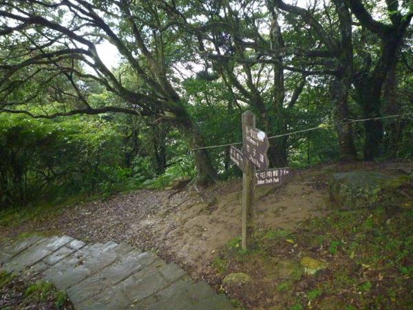 竹子湖上中正山 014.JPG