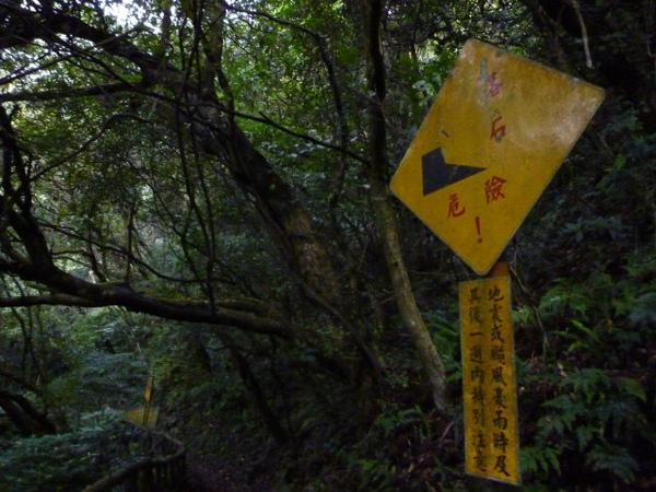 竹子湖上中正山 067.JPG