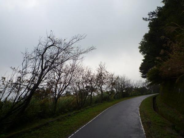 竹子湖上中正山 078.JPG
