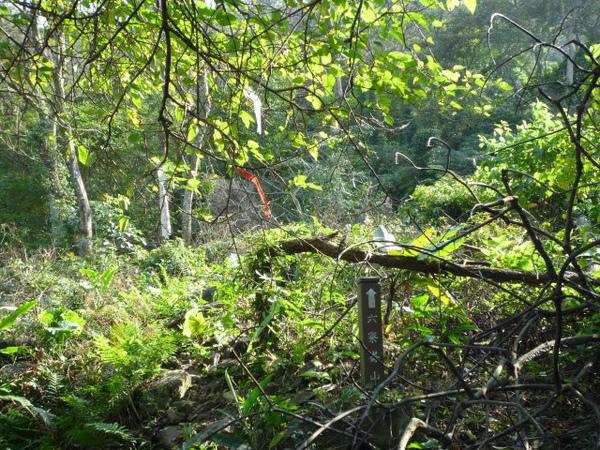 紫微聖母環山步道 097.JPG