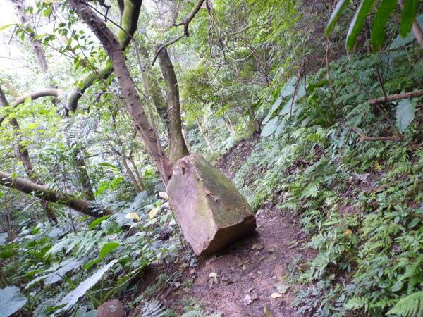 紫微聖母環山步道 212.JPG