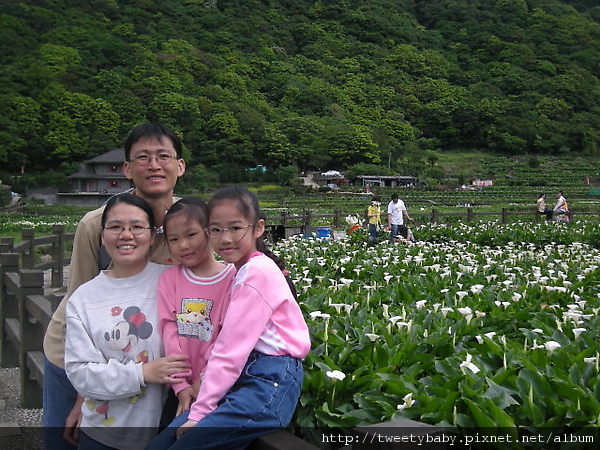 20080420竹子湖頂湖海芋 007.JPG