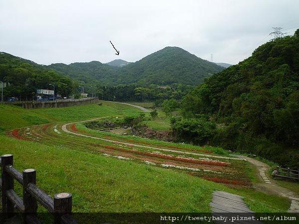 大溝溪步道.碧山巖.鯉魚山.白石湖吊橋 028.JPG
