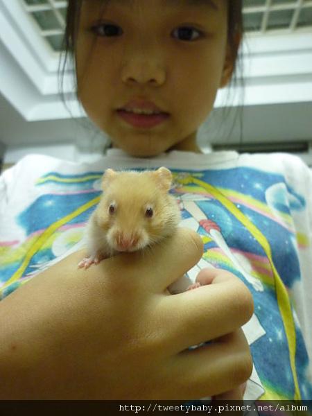 黃金鼠 001.JPG