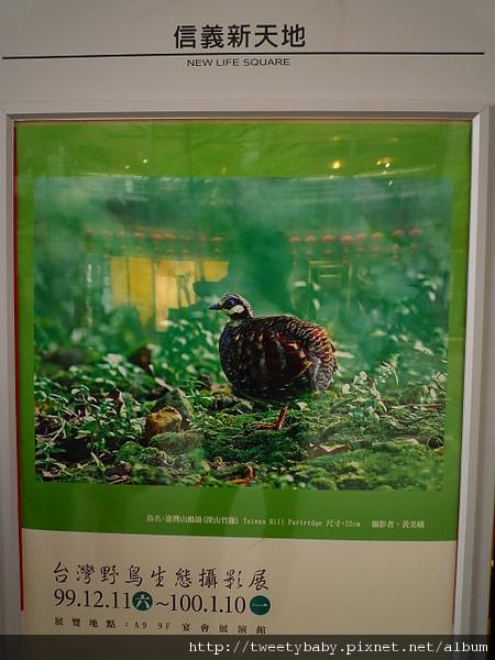 郭耿中鳥類攝影展 002.JPG