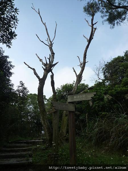 圓潭子坑山.待老坑山.二殯送行 065.JPG