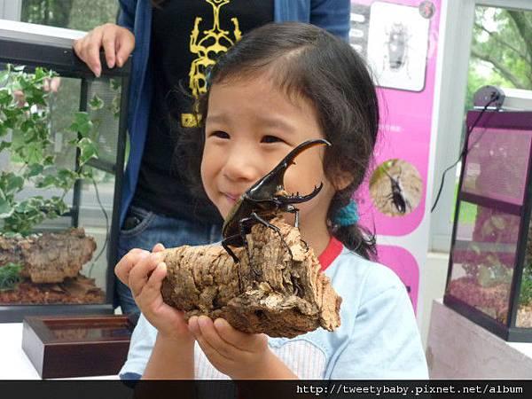 最後一天.青年公園昆蟲展 031.JPG