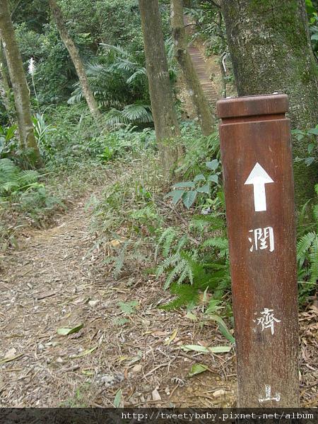三山國王山.潤濟宮登山步道 077.JPG