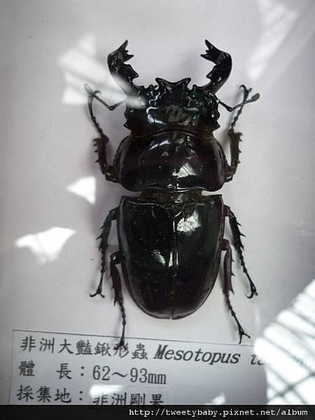 最後一天.青年公園昆蟲展 049.JPG